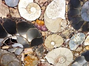 Fossil Antque
